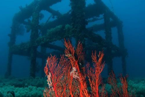 Steel Reef