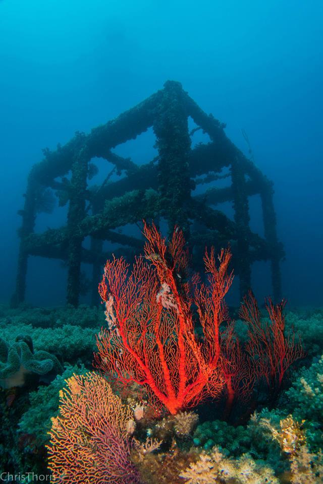 Steel Reef, Green Island