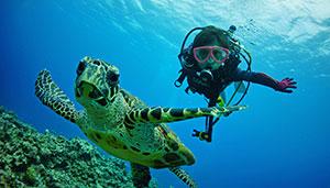 Scuba Diving Trips Taiwan & Overseas
