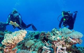 ReefCheck scuba divers