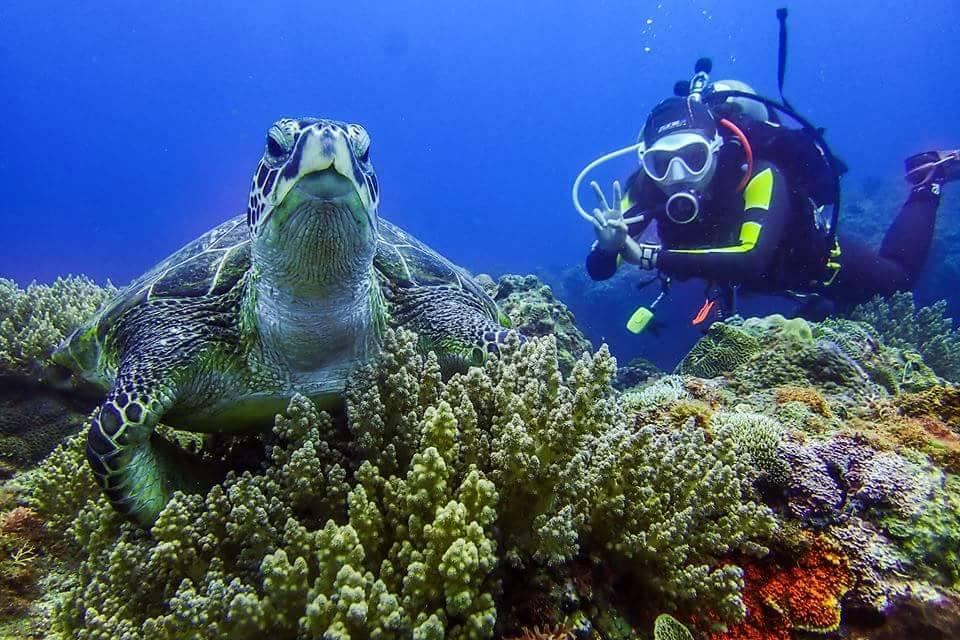 Green Sea Turtle Diving & Hostel 綠蠵龜潛水住宿