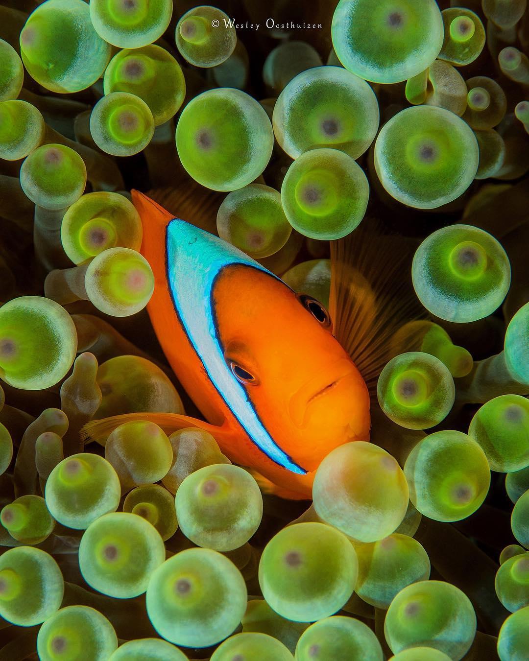 Wesley Oosthuizen Art, Underwater Photography